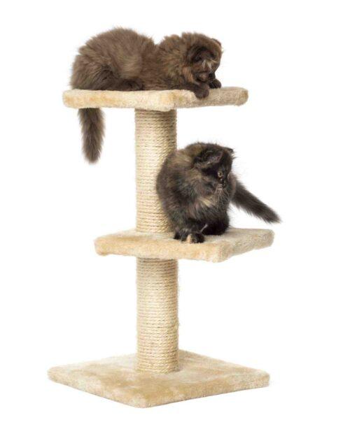 Wie hoch sollte ein Kratzbaum für ein Kätzchen sein?